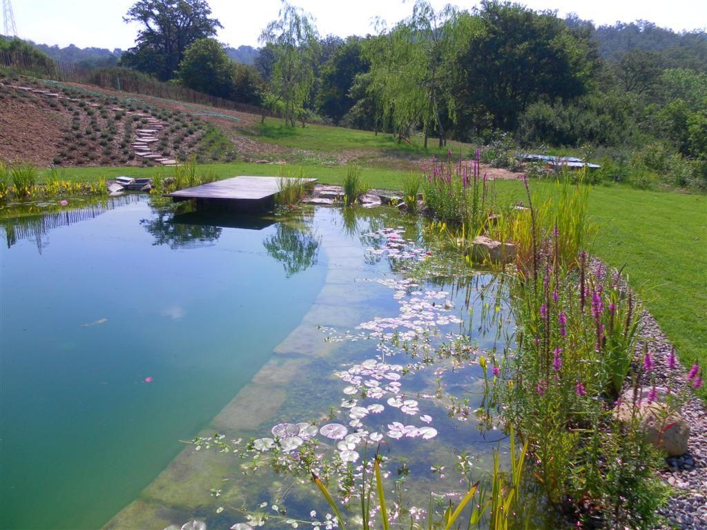 Bio piscine e laghetti ninfee barbagli for Laghetti ornamentali